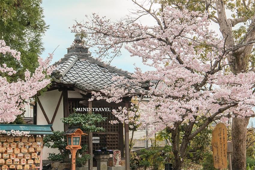 帯解寺 桜