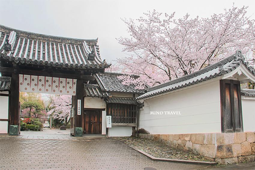 勧修寺 門 桜2