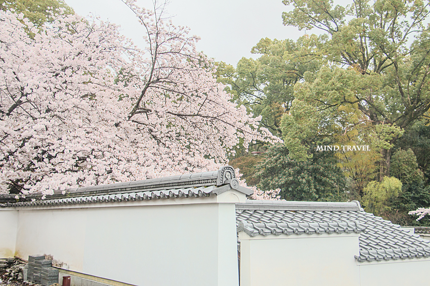 髄心院 桜
