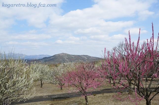 フラワーパークの春の彩