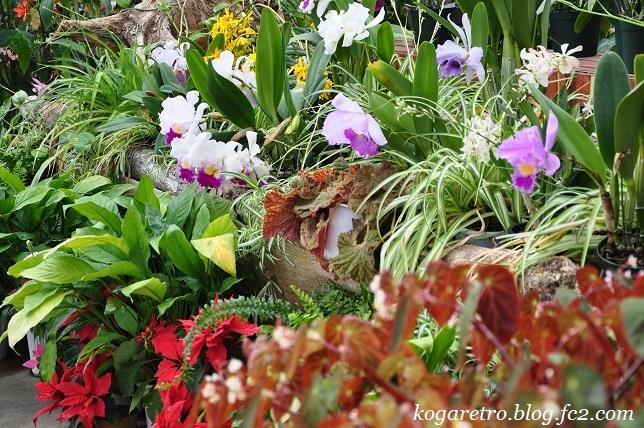 フラワーパークの春の彩7
