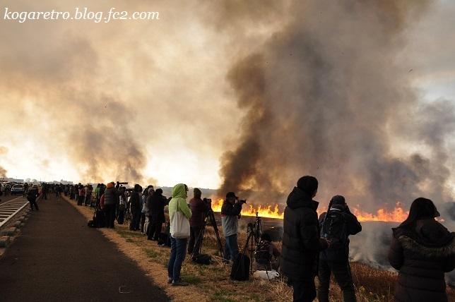 2017渡良瀬遊水地のヨシ焼き2