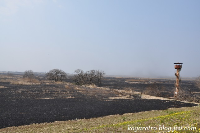 ヨシ焼き後の遊水地