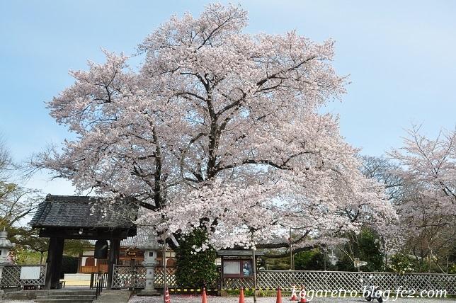 2017満福寺の桜