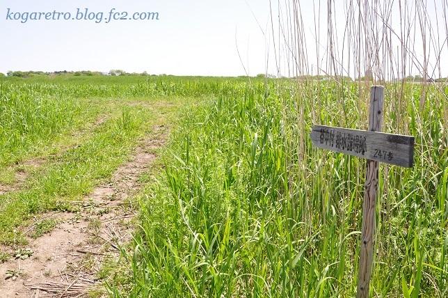 谷中村排水器場跡4