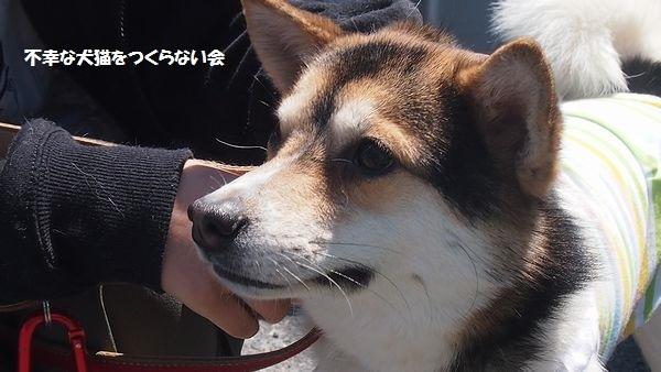 はなちゃん (2)
