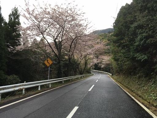 空の公園桜80