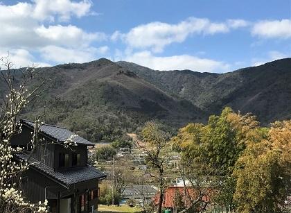 sakodanosakura (4)
