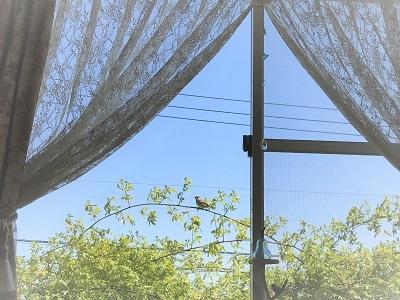 KONOHA窓辺 (2)