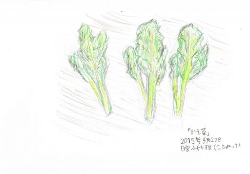 かき菜のスケッチ