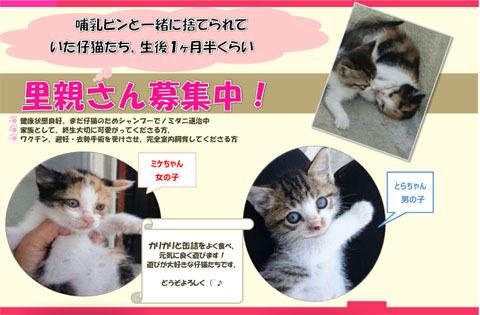 豊川さん募集仔猫チラシ1s