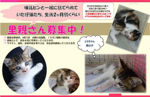 豊川さん募集仔猫チラシ1のコピー