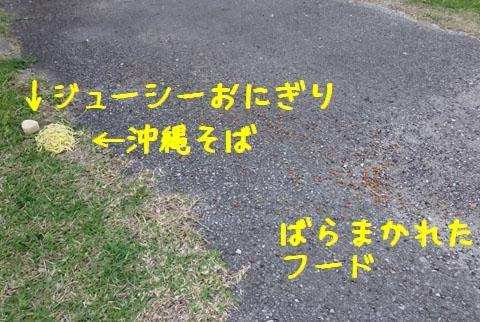 DSC00315.jpg