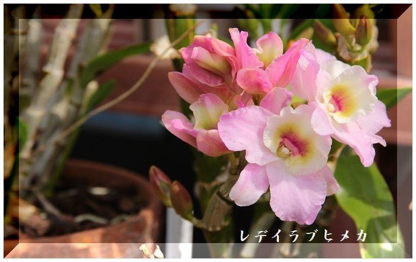 IMG_1099_R.jpg