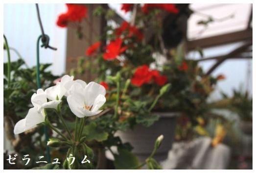 IMG_1577.jpg