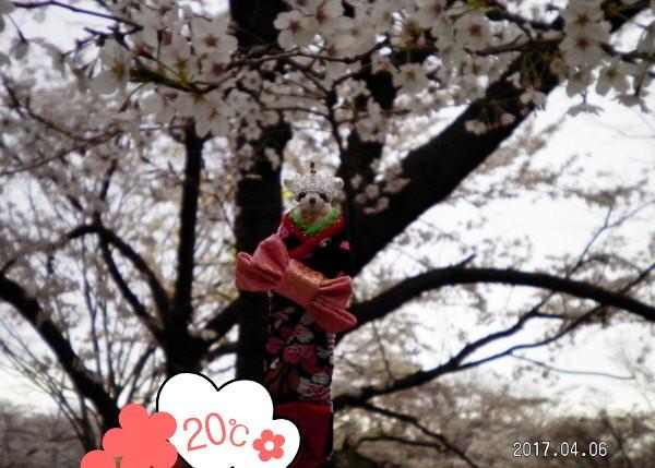 花ブ20170426-1