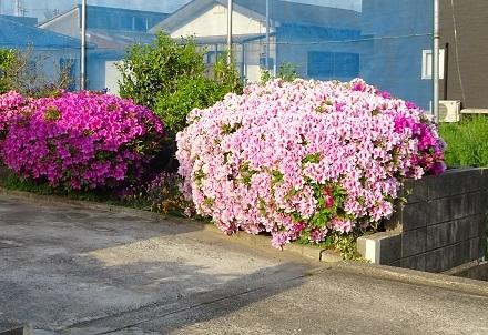 花が一杯31