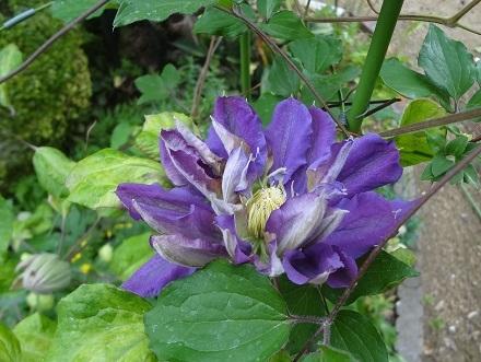 花がいっぱい52 (2)
