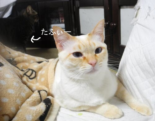 20174gatu7 002のコピー