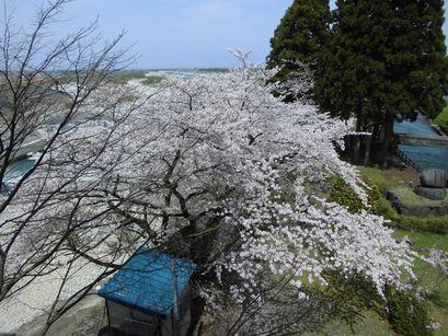 asakura0416-12.jpg