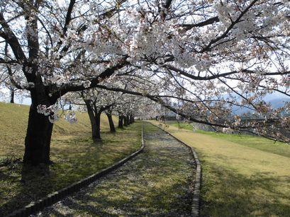 asakura0416-4.jpg