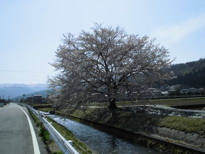 asakura0416-6.jpg