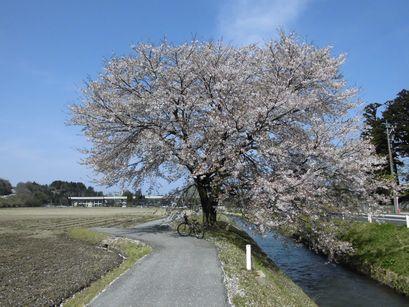 asakura0416-7.jpg