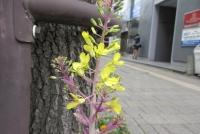 黄色の花が開いている