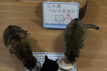 kotasuzumiyu102.jpg