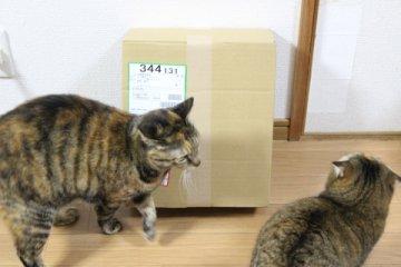 miyusuzu139.jpg