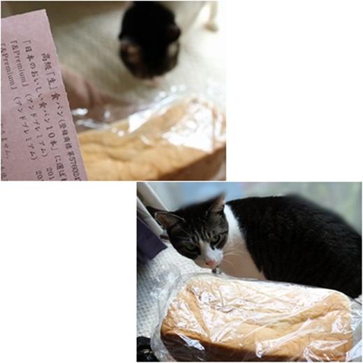 cats1_20170314212809ae2.jpg