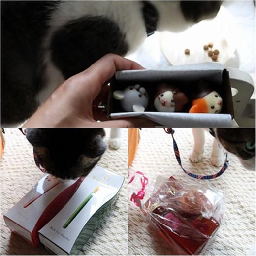 cats_20170314212808adb.jpg