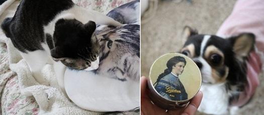 cats_20170411173840eec.jpg