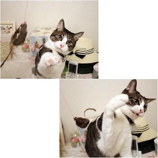 cats_20170419210111e43.jpg