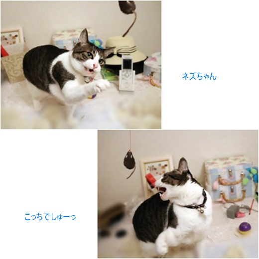 cats_201704211923194a5.jpg