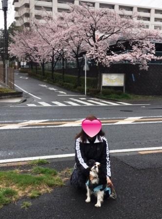 17sakura0409_1391blg.jpg