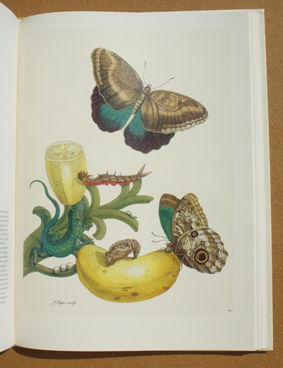 merian - insects of surinam 02