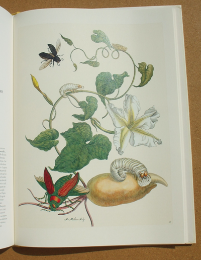 merian - insects of surinam 03