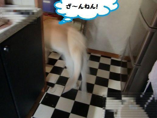CIMG7078.jpg
