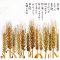 麦の穂(星野富弘)