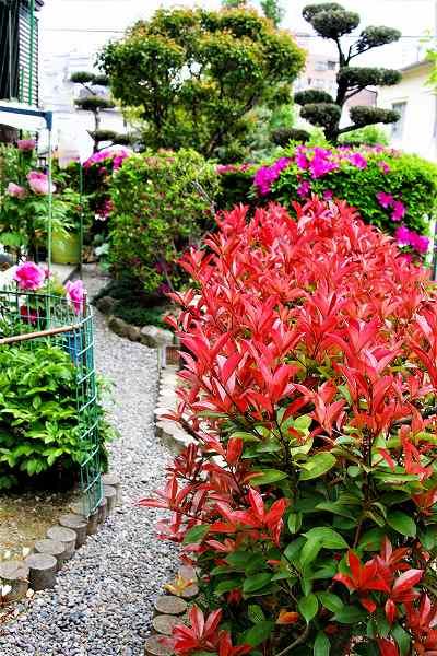 小庭の花々