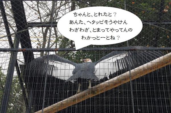 福岡市動物園のコンドル