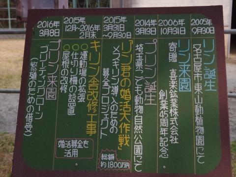 大牟田市動物園のキリン