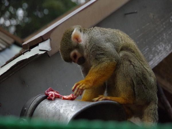 大牟田市動物園のリスザル