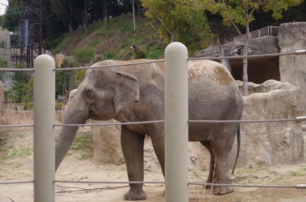 福岡市動物園 はなこちゃん