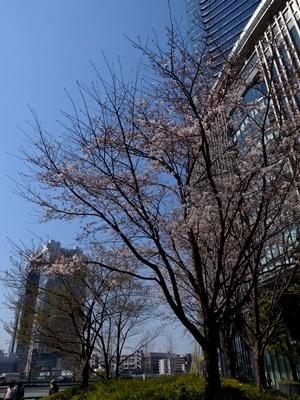 グランフロント大阪の桜1704