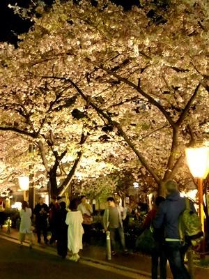 高瀬川木屋町夜桜1704