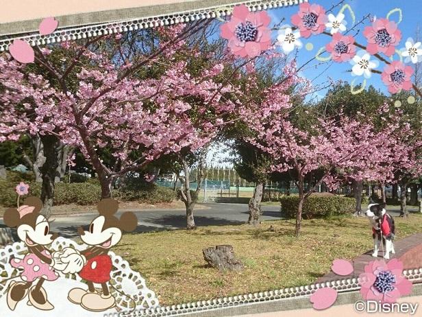 Image_57e7cb1.jpg