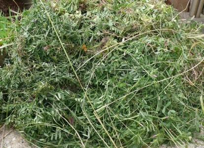 山盛りの雑草