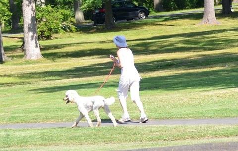 170504 散歩愛犬